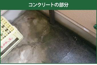 藻の生えたコンクリート部分
