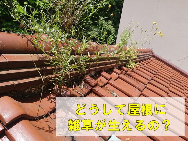 どうして屋根に雑草が生えるの?