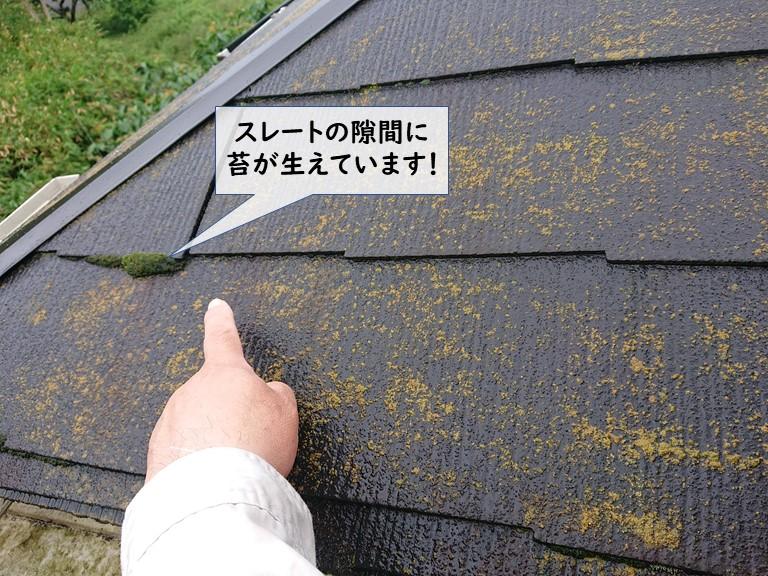 和泉市のスレートの隙間にも苔が生えています