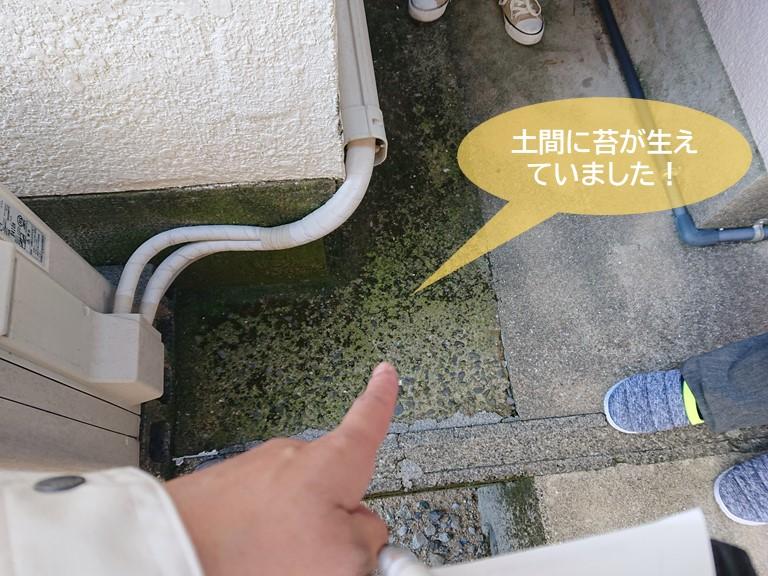 和泉市の土間に苔が生えていました!