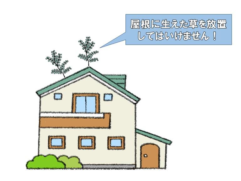 屋根に生えた草を放置してはいけません