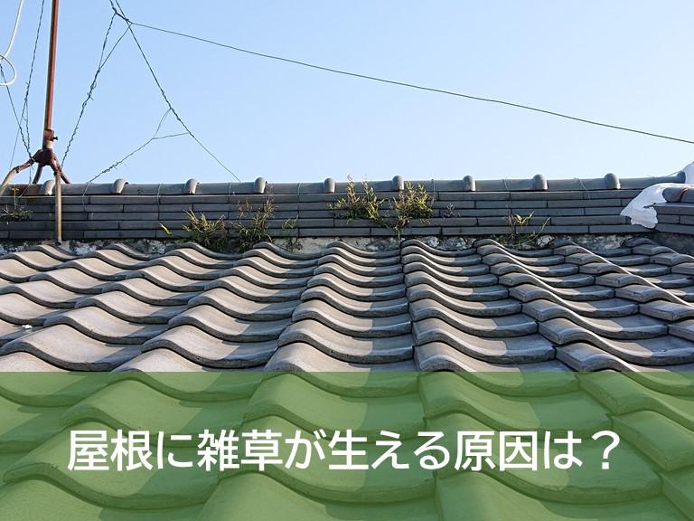 屋根に雑草が生える原因は?