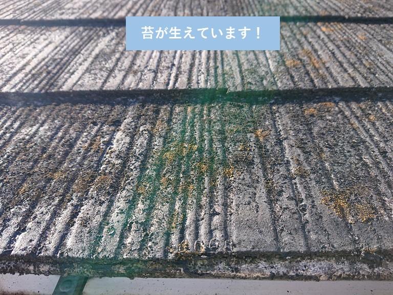 岸和田市のカラーベストに苔が生えています