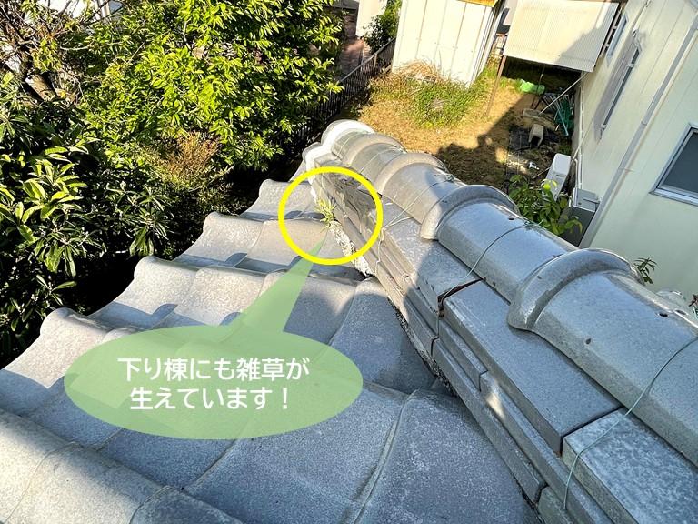 岸和田市の下り棟にも雑草が生えています