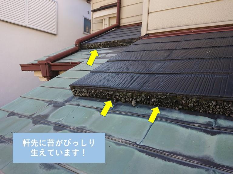 岸和田市の下屋の軒先に苔がびっしり生えています