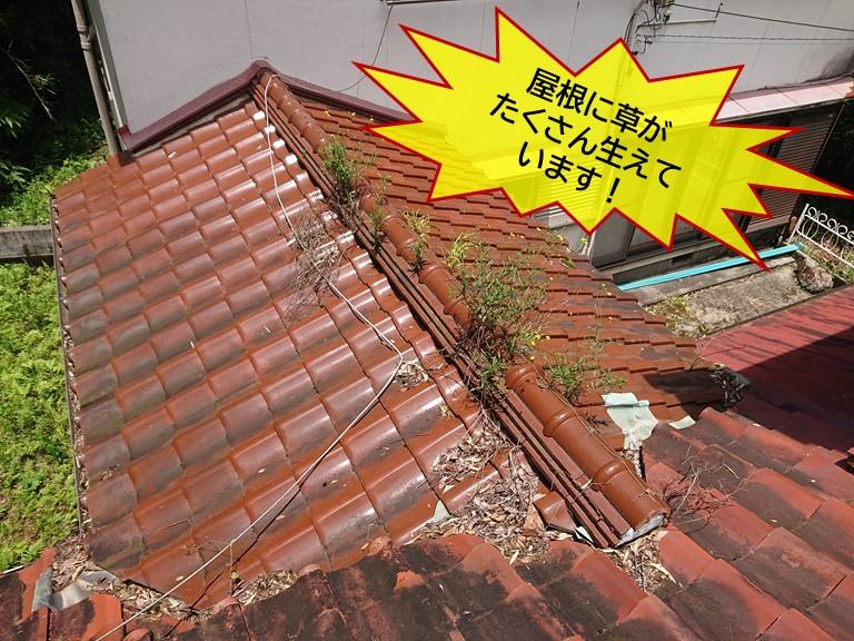 岸和田市の屋根に草がたくさん生えています