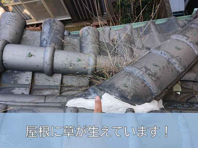 岸和田市の屋根に草が生えています