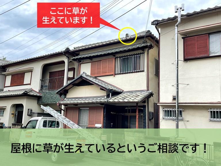 岸和田市の屋根に草が生えているというご相談