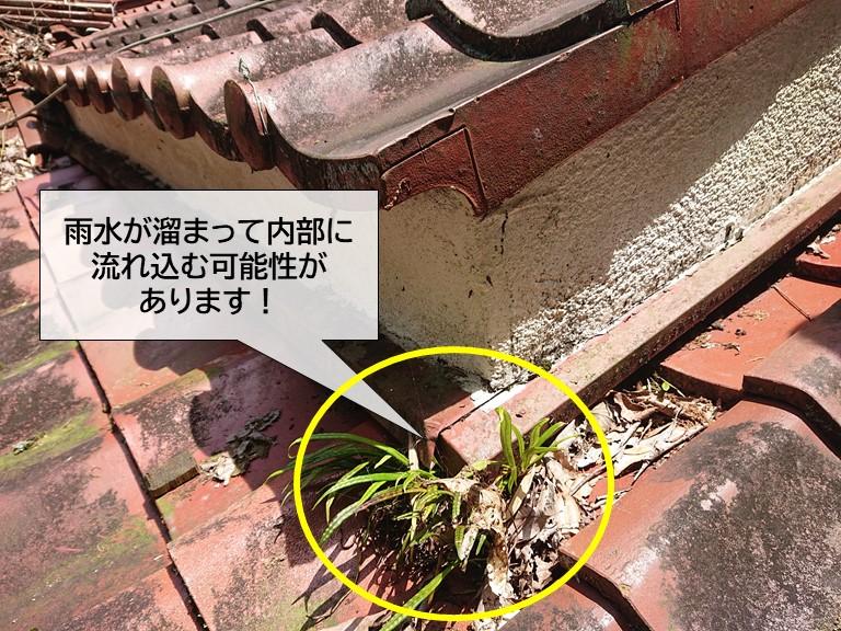 岸和田市の屋根に草が生えて雨水が溜まっている可能性があります