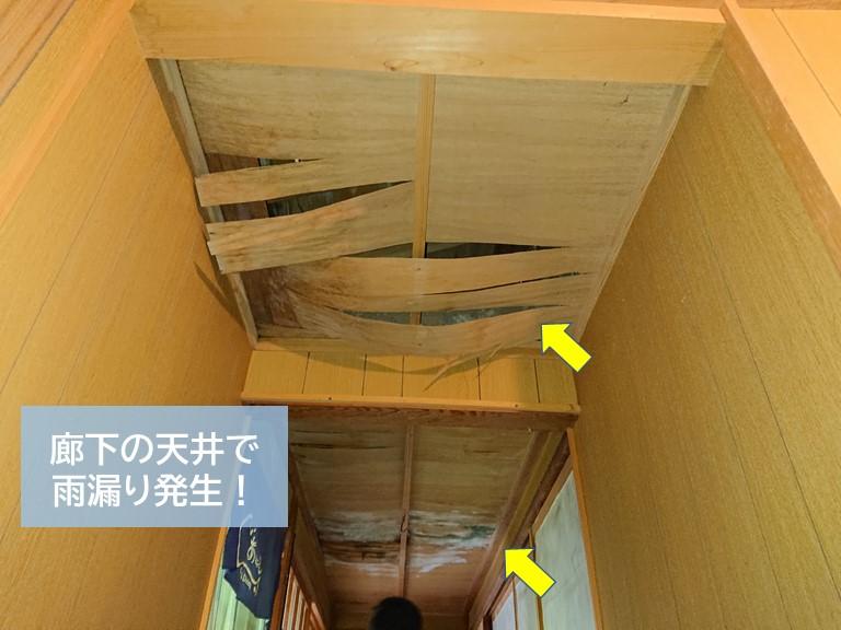 岸和田市の廊下の天井で雨漏り発生