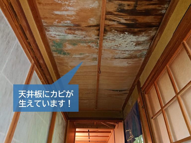 岸和田市の廊下の天井板にカビが生えています