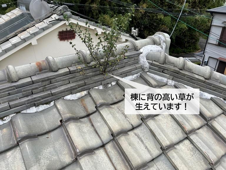 岸和田市の棟に背の高い草が生えています