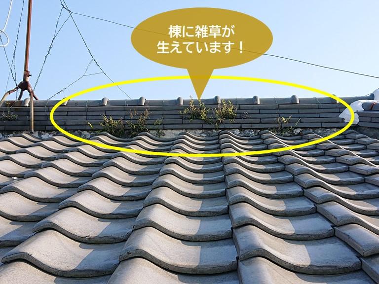 岸和田市の棟に雑草が生えています