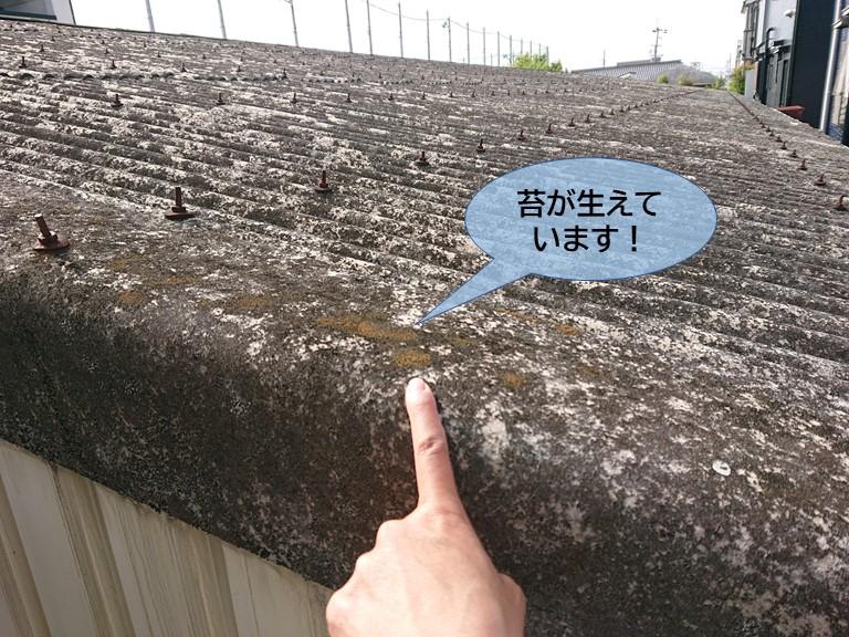 岸和田市の波型スレートに苔が生えています