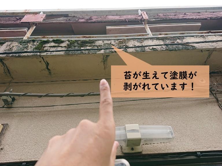 岸和田市の雨漏り箇所の上のベランダに苔が生えています