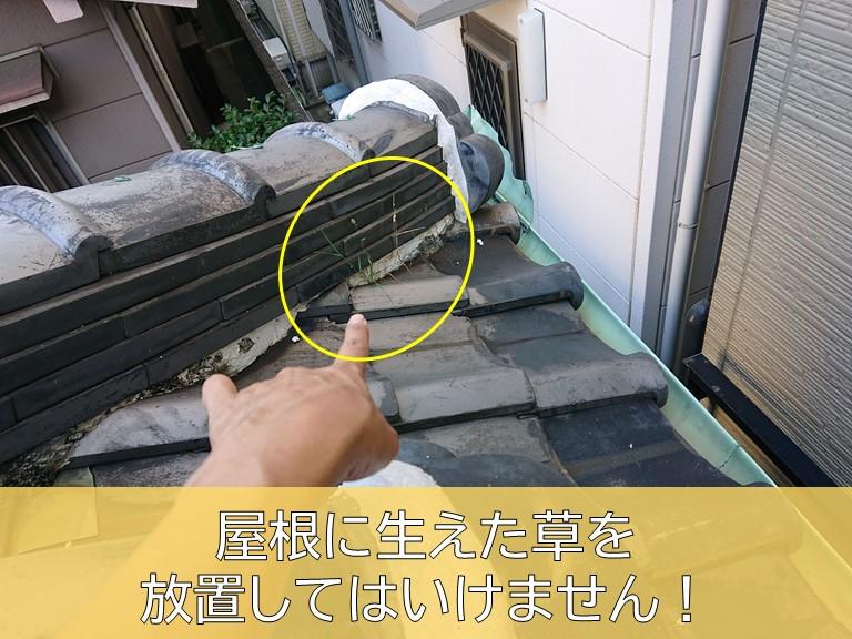 岸和田市・屋根に生えた草を放置してはいけません
