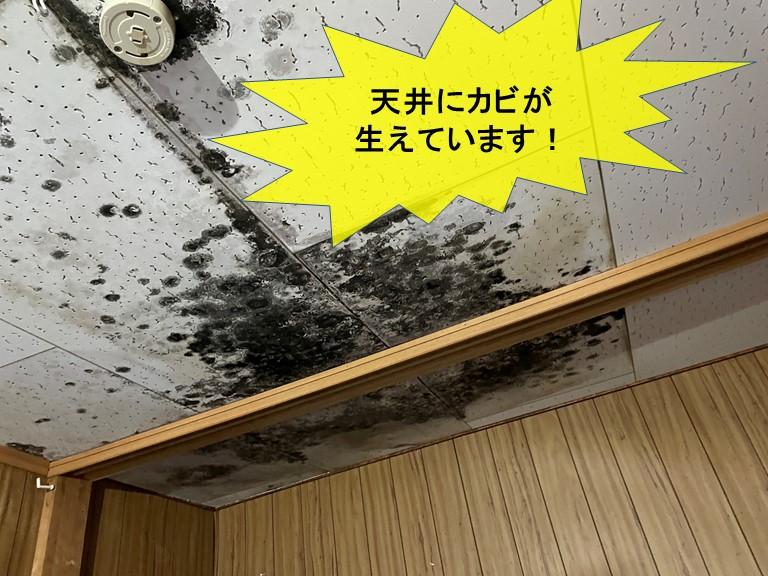 泉大津市で行う雨漏り修理と軒天修理などの工事内容について