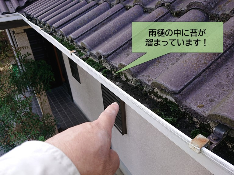 泉大津市の雨樋に苔が詰まっています