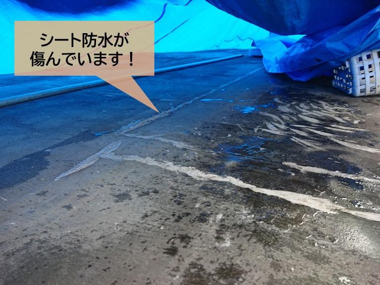 貝塚市のバルコニーのシート防水が傷んでいます