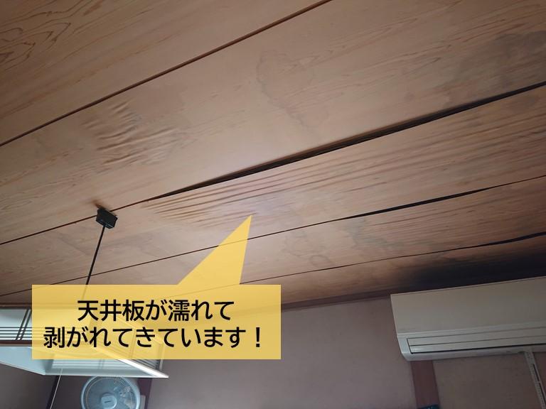 高石市の雨漏りで天井板が剥がれてきています