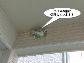 岸和田市のツバメの巣は保護しています