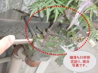 和泉市の雨樋詰まり状況