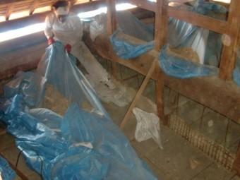 岸和田市土生町の小屋裏清掃