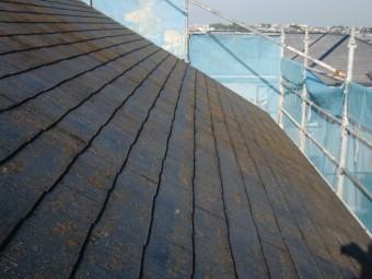岸和田市岡山町の屋根に付いた苔