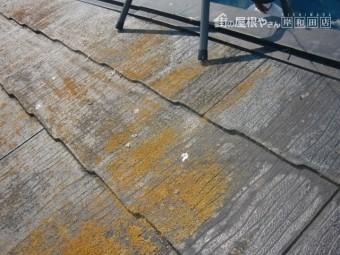 岸和田市摩湯町のコロニアル屋根の苔現況
