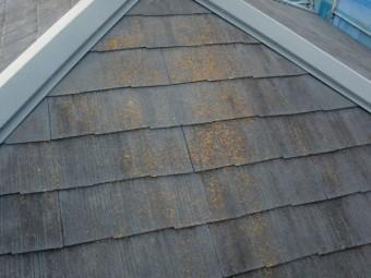 岸和田市尾生町の苔が生えた屋根洗浄