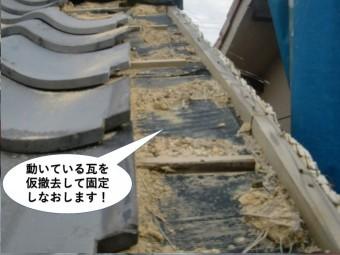 泉佐野市の動いている瓦を仮撤去して固定しなおします