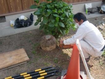 岸和田市土生町の屋根葺き替えに伴う植木なども撤去