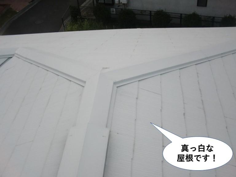 泉南市の真っ白な屋根です