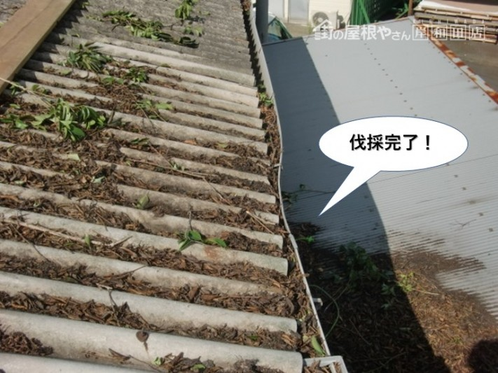 岸和田市の木の伐採完了