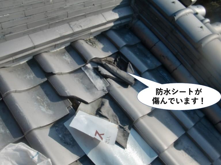 阪南市の応急処置の防水シートが傷んでいます