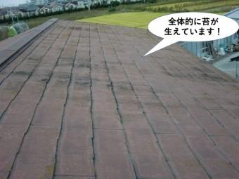 貝塚市の屋根に全体的に苔が生えています