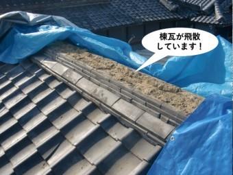 和泉市の母屋の棟瓦が飛散