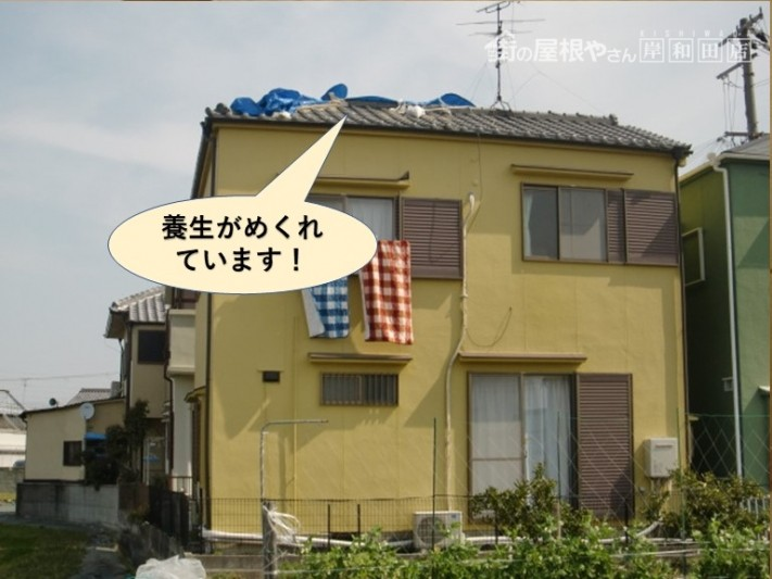 岸和田市の屋根の養生がめくれています