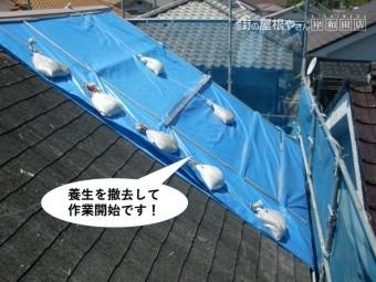 熊取町の屋根の養生を撤去して作業開始