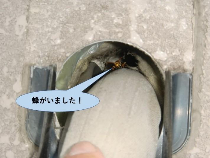 岸和田市の外壁の配管の穴の中にハチがいました!
