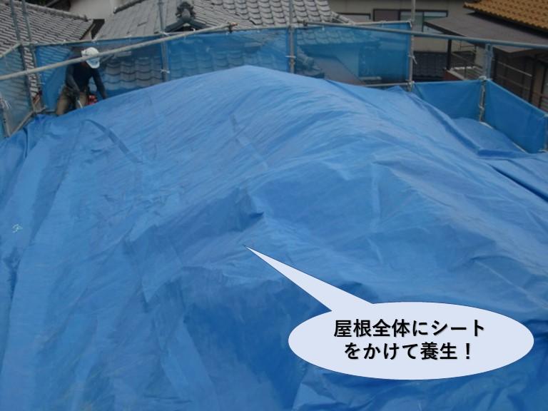 岸和田市の屋根全体のシートをかけて養生