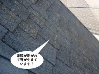 岸和田市の屋根の塗膜が剥がれて苔が生えています