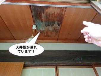 貝塚市の天井板が濡れています