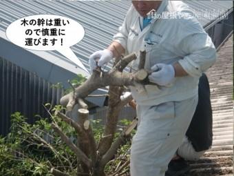 岸和田市の木の幹は重いので慎重に運びます