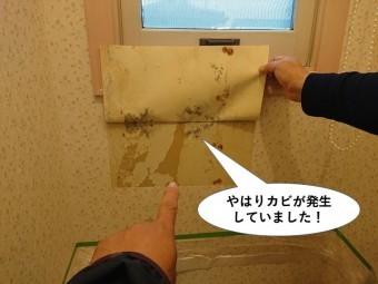 泉南市のトイレの壁にカビが発生していました