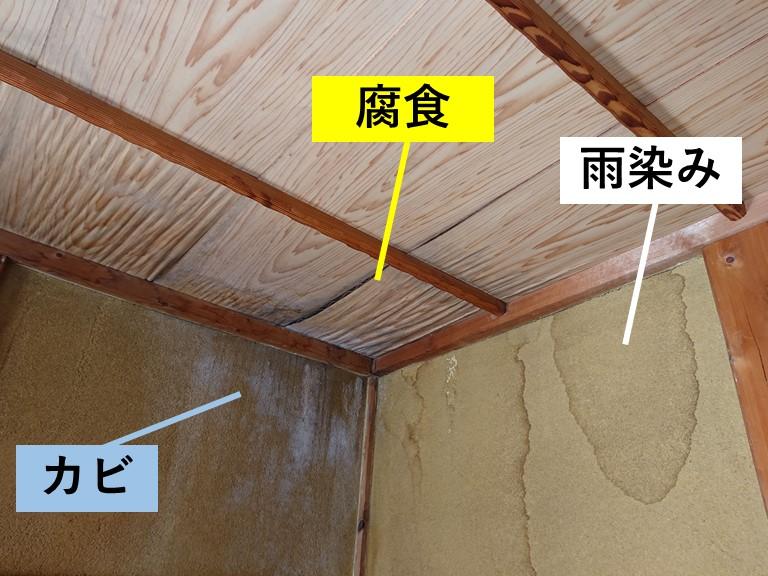 泉大津市の壁にカビが生えています
