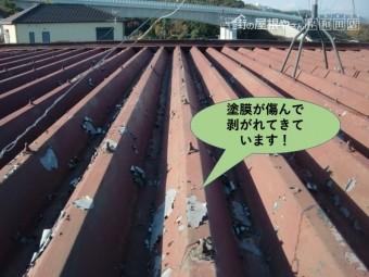泉南郡岬町の折板屋根の塗膜が剥がれてボロボロになっています