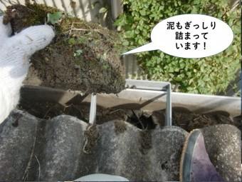 岸和田市の雨樋の中に泥もぎっしり詰まっています