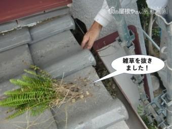 泉大津市の雨樋の中の雑草を抜きました