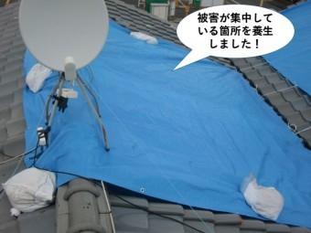 和泉市の屋根の被害が集中している箇所を養生しました